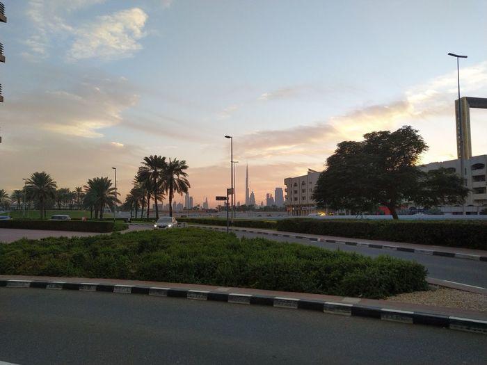 One fine evening dubai Tree Sunset City Sky Cloud - Sky Calm Palm Tree