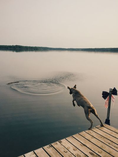 High angle view of weimaraner jumping over lake against sky