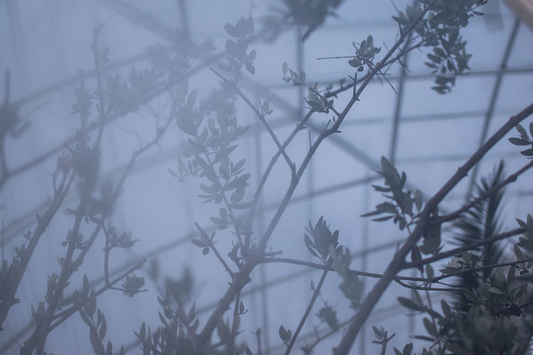 Plant Tree Cold Temperature Winter No People Nature Branch Focus On Foreground Beauty In Nature Fog Selective Focus Day Growth Close-up Tranquility Frozen Outdoors Greenhouse Glass - Material