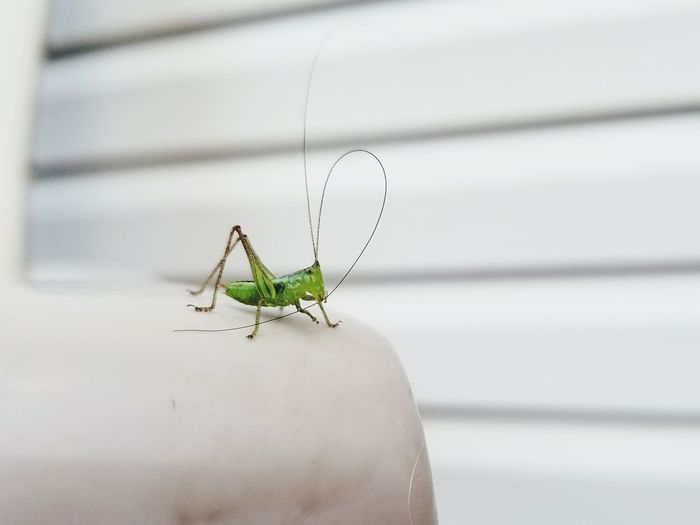 Tiny Insect Tiny Insects Animal Wildlife One Animal Animals In The Wild Insect Animal Themes Focus On Foreground Close-up Outdoors No People Nature