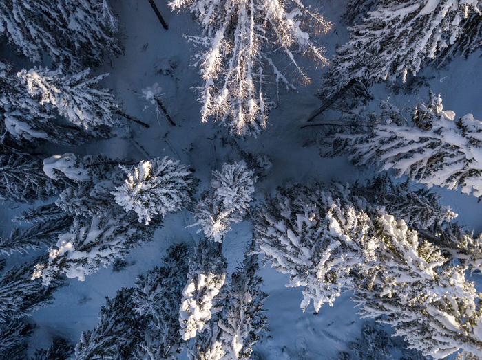 High angle view of plants and trees during winter