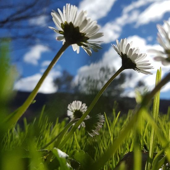 Flower Nature Plant Fragility Beauty In Nature Flower Head Springtime Wildflower Growth Uncultivated White Color Cloud - Sky Blossom Close-up Outdoors No People Sky Green Color Social Issues Freshness