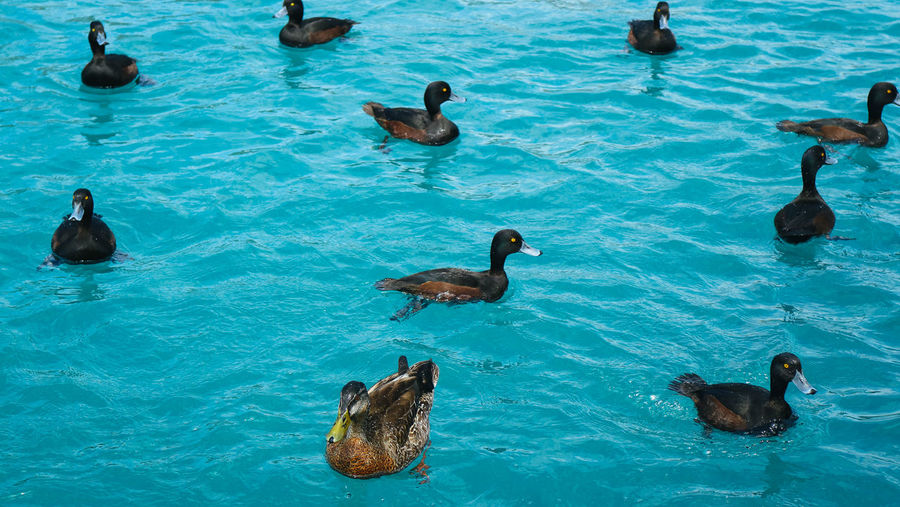 swimming in pattern Animal Themes Animal Wildlife Animals In The Wild Beautifully Organized Bird Blue Contrast Day High Angle View Nature Nature Harmony No People Outdoors Pattern Swimming Water Waterfront