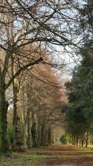 Saltram House Plymouth Devon Tree Nature Beauty In Nature Outdoors