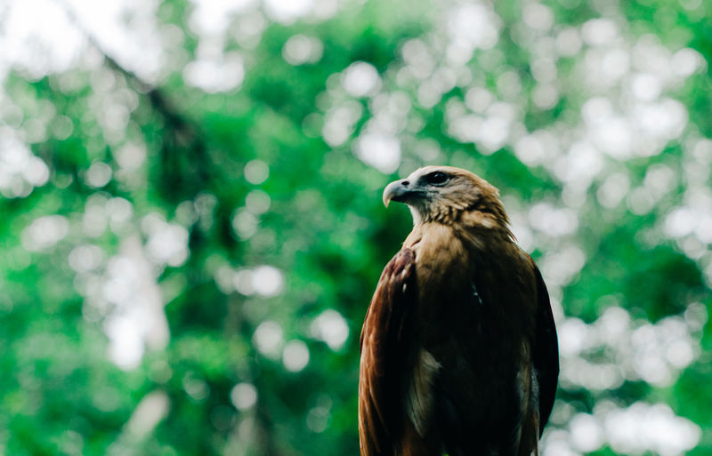 Close-Up Of Eagle Perching On Tree
