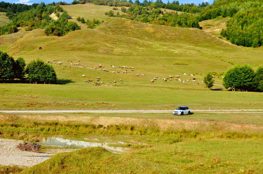 Agriculture Beauty In Nature Bmw Car Cars Day Grass High Angle View Land Vehicle Landscape Mini Cooper Mode Of Transport Nature Non-urban Scene Outdoors Plant Rural Scene Scenics Tranquil Scene Tranquility Transportation Travel Travel Destinations Tree
