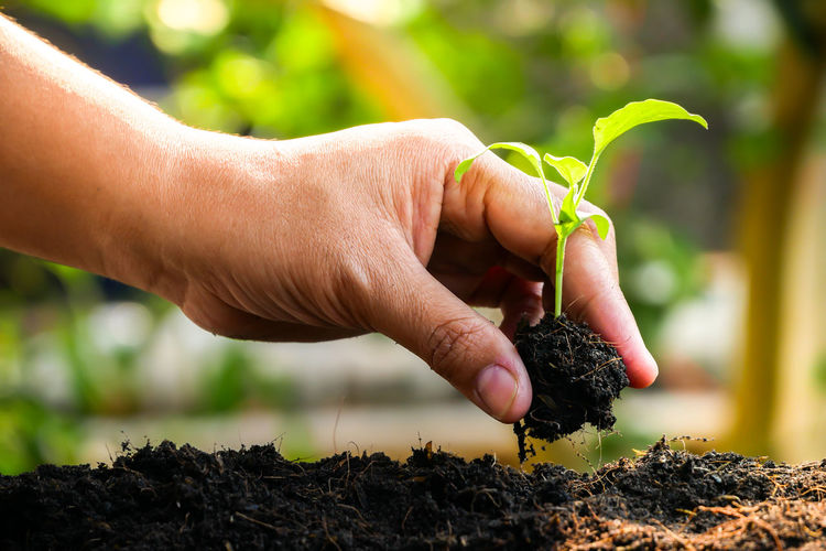 Human Hand Hand Human Body Part Growth One Person Plant Holding Gardening Real People Nature Dirt Focus On Foreground Close-up Leaf Plant Part Beginnings Day Finger Green Color Outdoors Planting Care