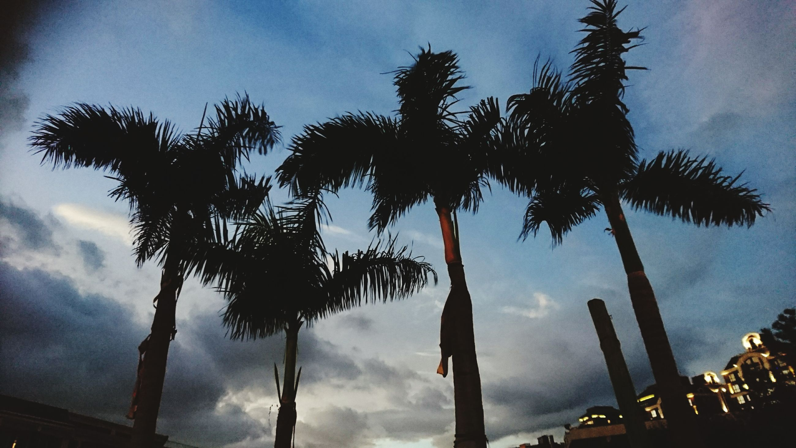 palm tree, low angle view, silhouette, tree, sky, growth, tree trunk, tall - high, cloud - sky, outdoors, nature, tranquility, tall, beauty in nature, tranquil scene, scenics, outline, bright, no people