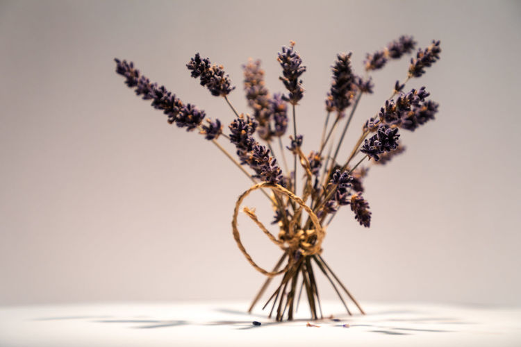 dried lavender bouquet Beauty In Nature Bunch Of Flowers Close-up Decoration Dried Flower Flowering Plant Focus On Foreground Fragility Growth Indoors  Lavender Nature No People Plant Plant Stem Selective Focus Still Life Studio Shot Table Vase Vulnerability