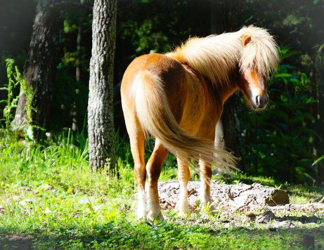 Brown pony on grassy field