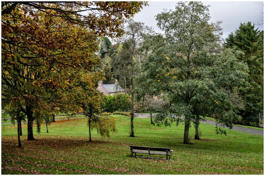 Kirriemuir Countryside The Den Green Color Outdoors Branches Of Trees Growth Tree Scenics Grass Textured  Backgrounds Leaf Autumn Beauty In Nature Fragility Plant Tree Trunk The Den House Kirriemuir Landscape Colour Nature Textured