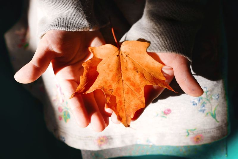 One Girl Only Leaf Vein Skirt Holding Autumn🍁🍁🍁 Autumnbeauty Autumn Leaves Light And Shadow Light Girl Still Life Human Hand Hand Human Body Part Real People Body Part Holding Autumn Finger Lifestyles Human Finger Close-up Orange Color Leaf Plant Part Maple Leaf Leisure Activity Nature Change