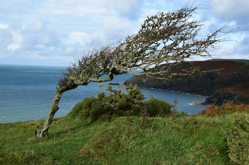 No Filter Tree Hanging Out Hello World Taking Photos Green Wood Water Blue Life Green Sea CliffEdge Walking Around Wales