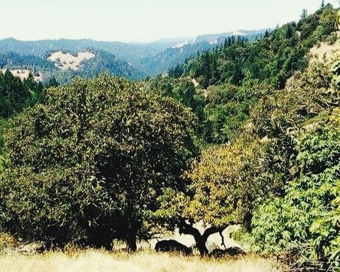 Landscape Norcal Countryside Scene Summertime Breathtaking Nature Porn Aries Lookin Tree Ontopoftheworld