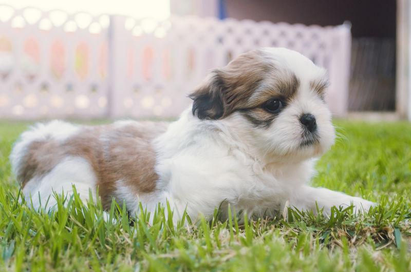 Dog lying on grassy field