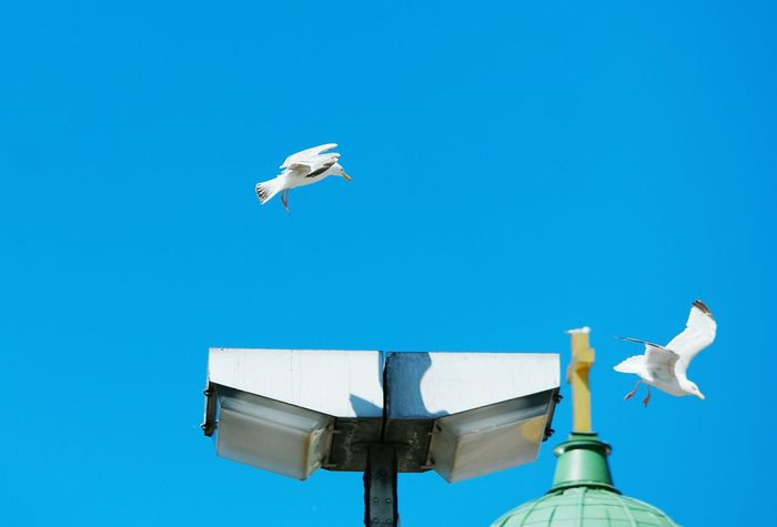 Gulls In Flight Gulls Herring Gull Blue Sky Summer2016 Bird Photography Going To Fly Away Birds At The Market Place Showcase July