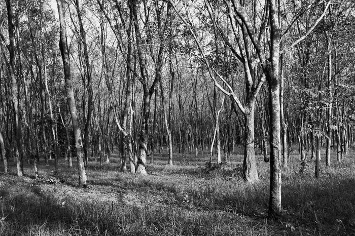 Beauty In Nature Blackandwhite Countryside Day Forest Growth Landscape Nature Non-urban Scene Outdoors Remote Scenics Solitude Tranquil Scene Tranquility Tree Tree Area Tree Trunk WoodLand Woods