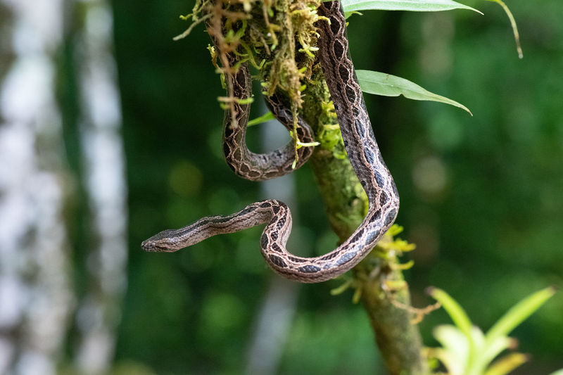 Close-up of barbed wire hanging on tree