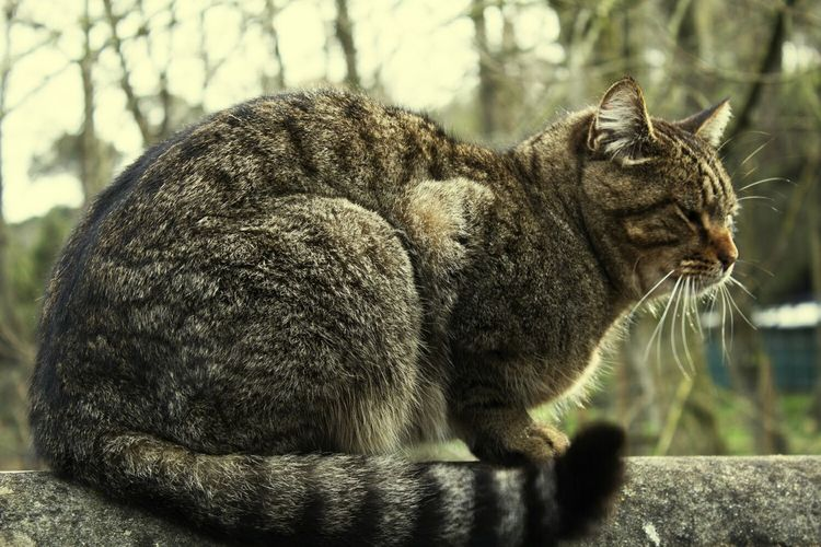 Cat Standing On The Wall