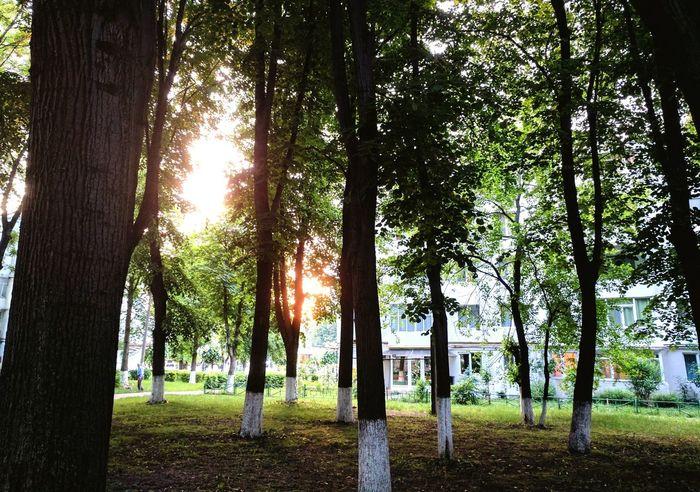 Grass Outdoors Sunlight Three Urban Forest