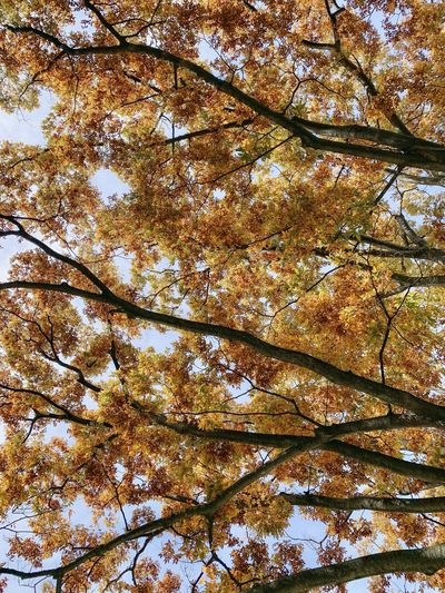 Low angle view of trees against sky during autumn