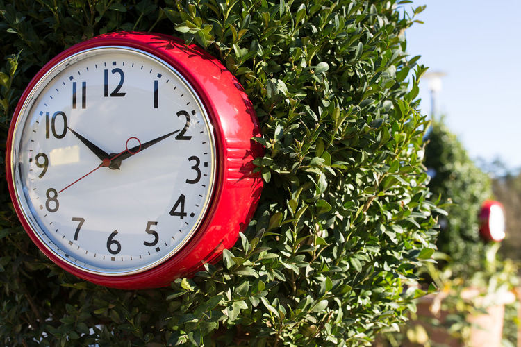 Close-up of clock against plant