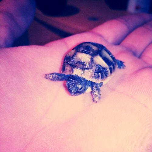 Turtle Newborn Baby