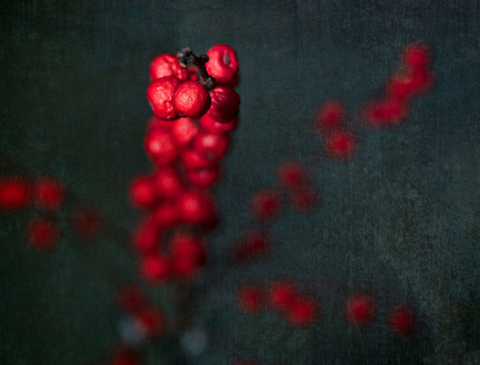 High angle view of red berries on black background