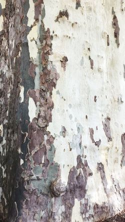 Textured  Full Frame Backgrounds Weathered Close-up Built Structure No People Outdoors Tree Trunk Day