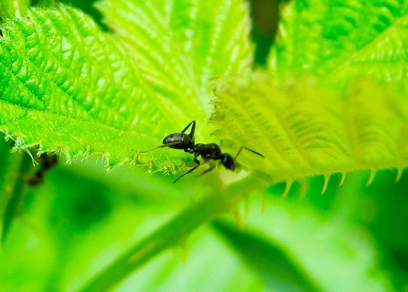 Insect Animals In The Wild Green Color Leaf Animal Themes One Animal Nature No People Plant Close-up Day Outdoors Growth