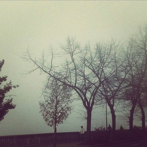 Fog Foggy Parma Urban Nature Beautiful Nature Symbol Street Happiness Peace Outdoors Lostinwonderland Picoftheday Tree And Sky
