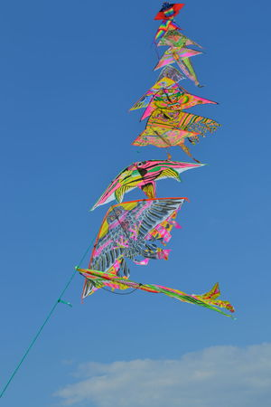 Aquilone Aquiloniovunque Blue Clear Sky Colorful Day Flying Growth Kite - Toy Large Group Of Objects Low Angle View Mid-air Multi Colored Multicolored Nature No People Outdoors Red Sky Skyporn Thecolorofsport Tranquility Vibrant Color Wind Windy