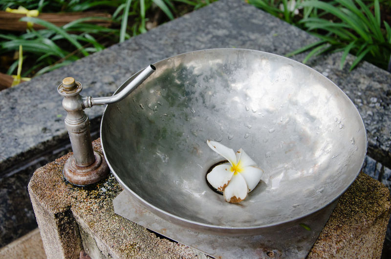 High angle view of frangipani in garden drinking fountain