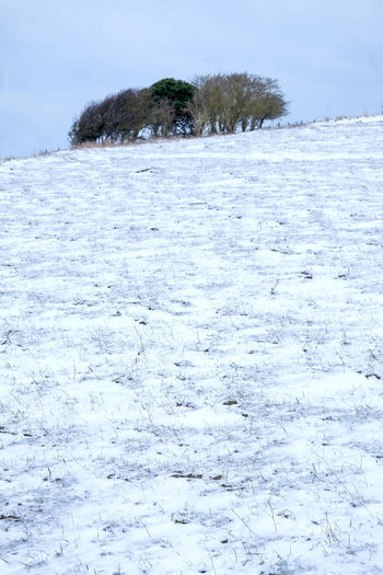 Snow On The Ground South Downs Sussex Downs Wintertime Animal Themes Beauty In Nature Close-up Cold Temperature Copse Day Hill Hillside Hilltop Nature No People Outdoors Scenics Sky Snow Snowing Snowy Field Snowy Fields Tree Tress Winter