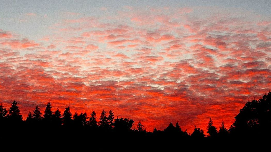 Red Sky at Night - Sailors Delite The Essence Of Summer Summer Vibes Summer Summer Time  Summer ☀ Summer! ♥ Skylover Skyscape Sky_collection Sky Sky And Clouds Skyline Summer Evening Summer Nights Nature_collection Sky And Trees Skyviewers