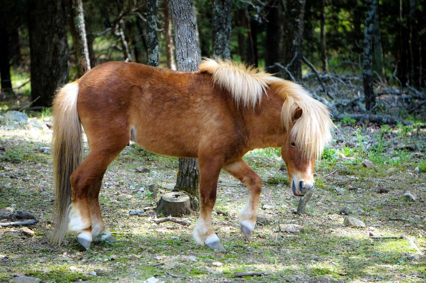 One Animal Domestic Animals Horse Animal Themes Outdoors Nature Close-up EyeEm Nature Lover Nature Photography Nature_ Collection  Nature On Your Doorstep EyeEm Best Shots - Nature Naturelovers Nature_perfection Miniature Horse Horse Photography  Rural Scene EyeEm Best Edits Photography Themes Eyeemphotography EyeEm Gallery Eye4photography  Eye For Photography ForTheLoveOfPhotography EyeEmBestPics