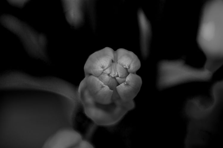 Beauty In Nature Blackandwhite Centered Composition Close-up Day Flower Flowerhead Fragility Freshness Grouth Human Body Part Indoors  No People Petal Springtime