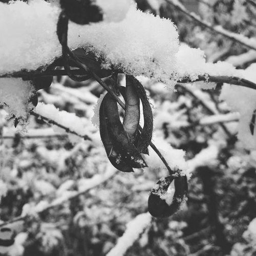 흑백 Black&white Snap Daliy Bw Blackandwhite Iphone6s IPhoneography 일상 Leaf