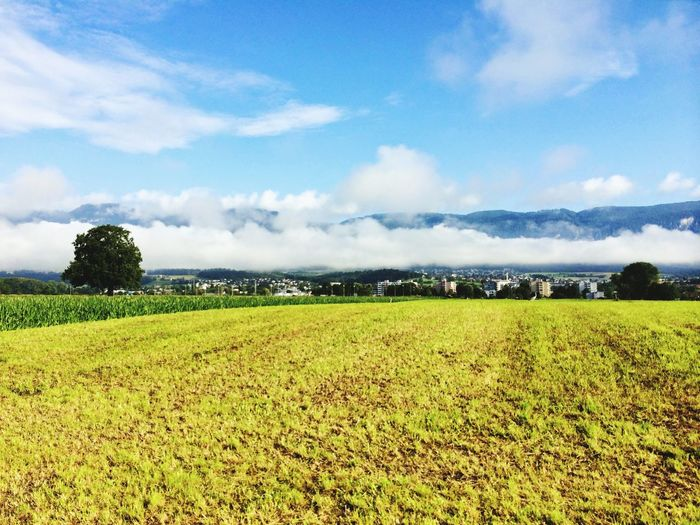 Rural Scene Cloud - Sky Agriculture Sky Field Nature Scenics Growth Crop  Beauty In Nature Landscape Farm Tranquility Flower Tranquil Scene No People Outdoors Green Color Day Solothurn