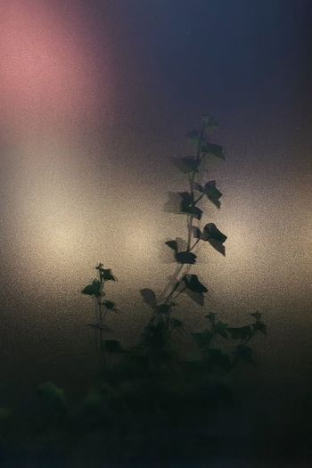 Low angle view of silhouette plant against wall at night