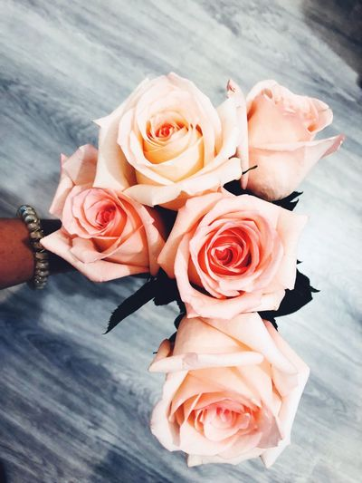 Flower Rosé Flowering Plant Rose - Flower Plant Freshness EyeEmNewHere Beauty In Nature No People Pink Color Bouquet Nature Flower Head