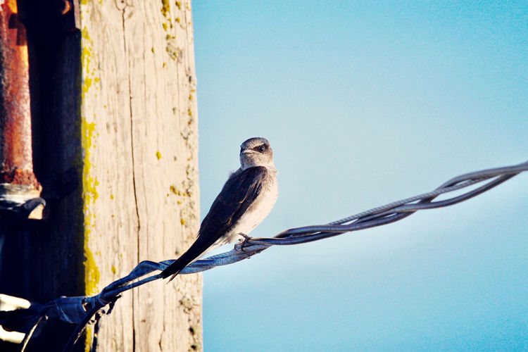 Low angle view of bird perching on fence against sky