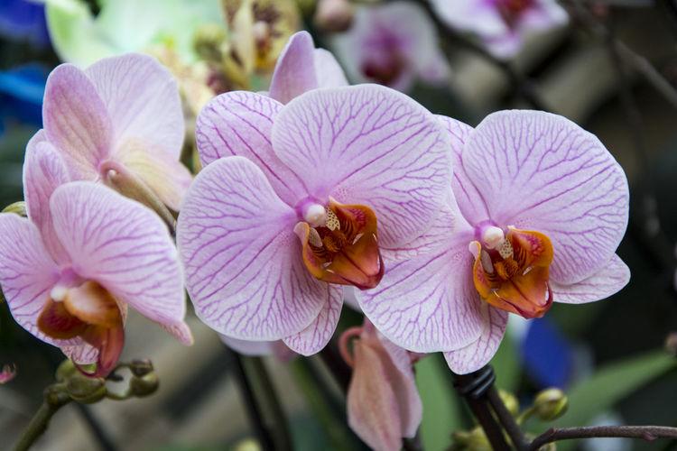 Orchids flower,