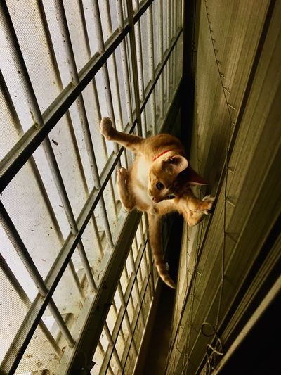 High angle view of dog in cage