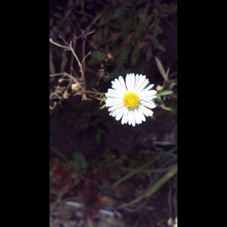 Littleflower Socute💕 Elsalvadorimpresionante Iloveit