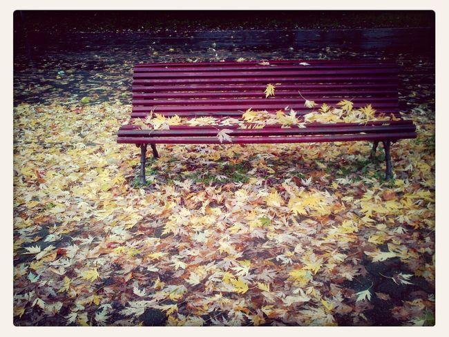...autumn leaves