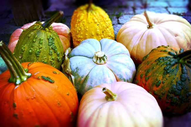 Pile of pumpkins and squash in a variety of colors. Pumpkin Halloween Vegetable Freshness Food Autumn Food And Drink Orange Color No People Squash - Vegetable Gourd Healthy Eating Close-up Day Nature Outdoors Fruit Agriculture Produce Organic Farming Organic Pumpkin Season Pumpkinpicking
