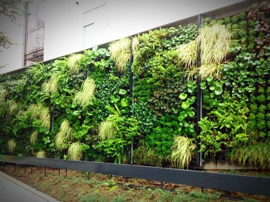 Cityscapes 緑の壁🌿笑