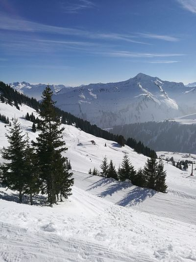 wintry Winter Mountain 72762 Pine Tree 12904616 Snowing