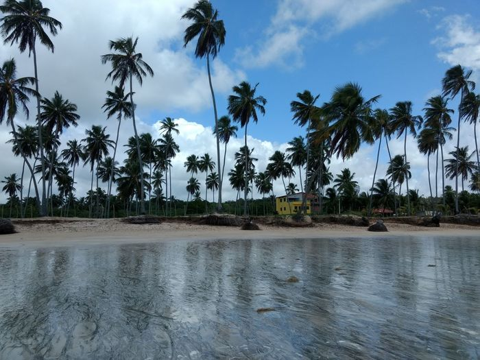 Beach Tree Water Palm Tree Flood Rice Paddy Tropical Climate Blue Sky Cloud - Sky Sandy Beach